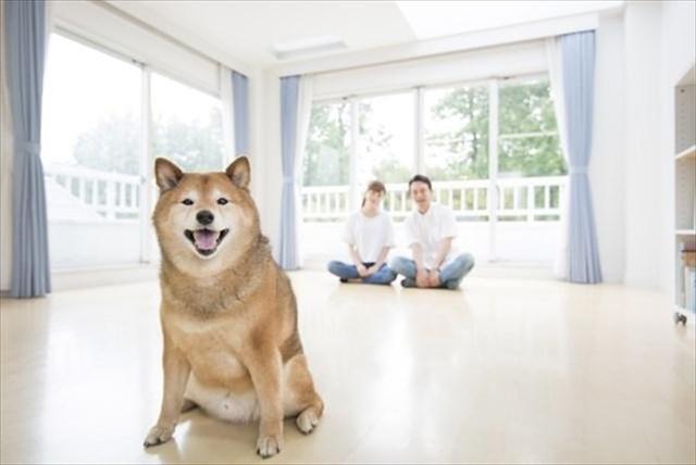 空室対策でペット可賃貸に変更する前に知っておきたいリスクと対策